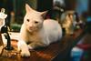 Apolo. (Adolfo Rozenfeld) Tags: gato buenosaires lensturboiifd canonfd50mmf14 manuallens vintagelens cat shallowdof depthoffield bokeh dof apolo availablelight bar café