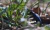 Karl der Käfer... (Froschkönig Photos) Tags: karl der käfer karlderkäfer ölkäfer frühling gift giftig spanischefliege nex5r trioplan 100mm zwischenring macro makro bug lifeonmars