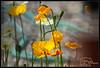 (K-Szok-Photography) Tags: outdoors 500mm flowers flowercolors socal california canon canondslr canon50d 50d kenszok kszokphotography