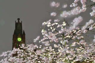 City Blossom