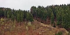 Der Aussichtsturm in Marmagen (mama knipst!) Tags: aussichtsturm marmagen gillesbachtal hundsrücken eifel frühling spring natur