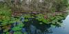 _J5K9539-42.1113.Suối Yến.Chùa Hương.Hương Sơn.Hà Nội (hoanglongphoto) Tags: asian asia vietnam northvietnam landscape scenery vietnamlandscape vietnamscnery vietnamscene nature 1x2 imagesize1x2 water stream yenstream flower watersurface canoneos1dsmarkiii zeissdistagont3518ze hànội hươngsơn chùahương suốiyến phongcảnh thiênnhiên hoa hoasúng nước mặtnước waterlily
