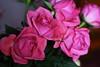 DSC_9147 (PeaTJay) Tags: nikond750 sigma reading lowerearley berkshire macro micro closeups gardens indoors nature flora fauna plants flowers bouquet rose roses rosebuds