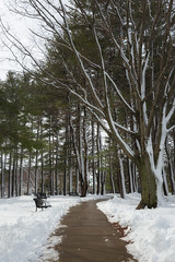 A bit of green for St. Patrick's Day! (lilredlizzie) Tags: snow winter woods trees outside outdoors woburn massachusetts newengland hornpond canon canon6d canon2470l landscape snowy weather beautiful beauty pretty nature naturelovers path