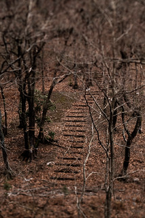 The path of fallen leaves