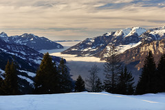 Sea of fog (Thomas Mülchi) Tags: 2017 ch cantonofstgallen flumserberg landscape maschgenkamm mountain mountains switzerland zürcheroberland clear clearsky clouds cloudy seaoffog sky snow snowy sunny tree trees winter quarten sanktgallen