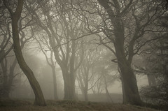 Peering Through (Glenn D Reay) Tags: freezingfog hadrianswall northumberland fog eerie trees spooky pentaxart pentax k30 glennreay sigma1770hsm