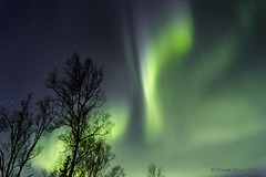 Curtains of green... (danielusescanon) Tags: borealis northernlights curtain green night wasilla alaska stars