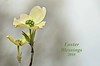 Easter Blessings (deanrr) Tags: easter easter2018 hope dogwood bloom outdoor nature morgancountyalabama alabama alabamanature blessings celebration flower