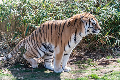 180323 National Zoological Park-08.jpg (Bruce Batten) Tags: locations terrestrial plants trips occasions zoos subjects mammals nationalzoologicalpark animals vertebrates businessresearchtrips washingtondc usa washington districtofcolumbia unitedstates us