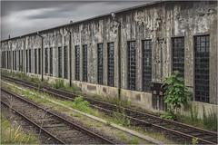 Grün ist die Hoffnung (Dieter Meyer) Tags: landauinderpfalz landau rheinlandpfalz pfalz südpfalz deutschland germany eisenbahn bahnbetriebswerk bw 1990 dietermeyer stillgelegt lostplace railroad