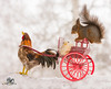red squirrel on an wagon with a rooster in snow (Geert Weggen) Tags: humor animal cute snow backlit bright closeup food horizontal mammal nature passion photography red rodent squirrel sun sweden travel vacations winter egg love balance easter knife table cock rooster chick wagon vehicle bispgården jämtland geertweggen geert ragunda