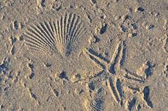 TEXTURE - CONCRETE AT THE BEACH (Wolf Creek Carl) Tags: texture concrete ocean shells starfish stgeorgeisland stgeorgeislandstatepark florida
