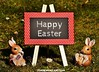 The New England Team Hapy Easter (The New England Team) Tags: thenewenglandteam happyeaster eastersunday easter easteregg