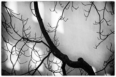 branches & twigs (fhenkemeyer) Tags: bw abstract twigs branches tree