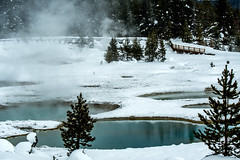 Yellowstone NP Trip - Day 4 (27) (tommaync) Tags: yellowstone yellowstonenationalpark yellowstonenp park national february 2018 wyoming nikon d7500 nature westthumb thermal hotspring snow tree boardwalk ice