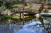 Do you see the koi fish? (PeterThoeny) Tags: saratoga california siliconvalley sanfranciscobay sanfranciscobayarea southbay hakonegardens japanesegarden garden park tree bridge archbridge woodbridge wood pond reflection water waterreflection day sony sonya7 a7 a7ii a7mii alpha7mii ilce7m2 fullframe vintagelens dreamlens canon50mmf095 canon 1xp raw photomatix hdr qualityhdr qualityhdrphotography fav200