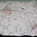 Hornblende andesite (western base of Mount Shasta, California, USA)