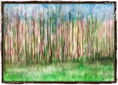 Bosque (Vilchez57) Tags: pintor pintura pintores acuarela color luz hierba bosque madera campo árbol alboleda pinceladas verde marrón azul surrealismo surrealista minimalismo vilchez57