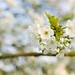Spring is here! Tijd voor bloesem
