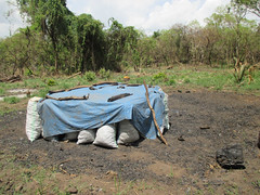 Adjumani charcoal 2 (FAO Forestry) Tags: fao un uganda refugees unhcr world bank environment energy south sudan woodfuel forestry
