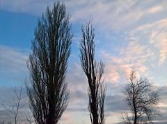 WP_20180324_17_32_28_Raw (vale 83) Tags: trees microsoft lumia 550 friends coloursplosion colourartaward