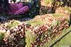 p7403_Errel2000_Praalwagen (Errel 2000 Fotografie) Tags: praalwagens noordwijkerhout roblangerak errel2000 bloemen flowers corso bloemencorso bollenstreek bloembollenstreek kleurrijk
