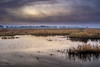 Dawn Over Colusa National Wildlife Reserve (Selkii's Photos) Tags: california clouds colusa colusacounty colusanwr colusanationalwildliferefuge dawn morning pond reeds sacramentonationalwildliferefugecomplex sunrise water unitedstates