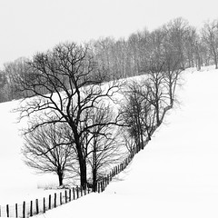 Yours And Mine (nrg_crisis) Tags: snow fence farm rural virginia trees hill sky hff