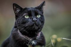 Bella (aquanout) Tags: animal fur whiskers bokeh green