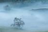 Joesph D Grant Oaks in Fog (tompost) Tags: california spring nature bayarea joesphdgrant statepark fog mist