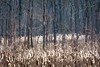 (rickhanger) Tags: nature nationalpark landscape trees cattails cvnp cuyahogavalleynationalpark