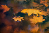Autumn Leaves Floating in a Stream (zuni48) Tags: leaves autumn fall impressionism topaztextureeffects topazimpression digitalpainting photoart phototopainting