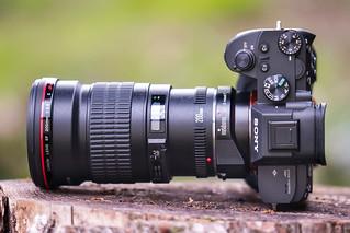 SONY ⍺7III (ILCE-7M3) & Canon EF200mm ƒ/2.8L II USM on Metabones T Mark IV