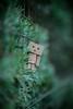 Danbo (Vagelis Pikoulas) Tags: danbo toy sigma bokeh canon f14 85mm blur 6d art greece green