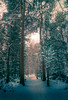 Moody winter woods (ThePunkyScotsman) Tags: snow snowscape woods winter moody leading
