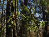 Forest at God's Thumb Hike in OR (Jeff Hollett in Vancouver, WA) Tags: godsthumb thumb hike oregon pacificcoast pacificocean pacificnorthwest forest