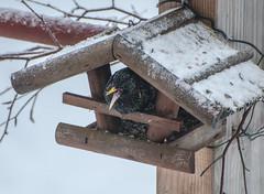 f..... cold !!! (Deutscher Wetterdienst (DWD)) Tags: wetter wetterwarte winter frost eis vogel bird birdhouse vogelhaus sturm storm frosty