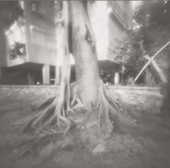 roots and pillars (Daphnesalbums) Tags: zone zero image 2000 camera plate ilford pan 50 caffenol