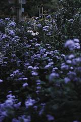 Flowers in the arboretum (Daniel_Little) Tags: nature flower pretty lexington kentucky photo fujifilm