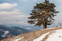 Lesnicke Sedlo (Kajfash) Tags: canoneos5dmarkii canonef70300mmf456lisusm lesnickesedlo przełęczpodtokarnią słowacja slovakia nature natura landscape krajobraz poranek morning wschódsłońca sunrise tatramountains tatry hightatra tatrywysokie