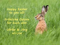 Happy Easter! - Frohe Ostern! (Uli-Joe) Tags: achimermarsch canonef400mmf4doisiiusm canoneos7dmarkii canonextenderef14xiii easter europeanhare feldhase gras ostern pflanzen säugetiere