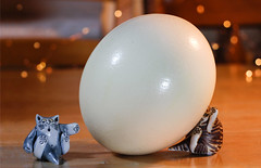 Whoops ... (Snorkle-suz) Tags: smileonsunday eggcellent catornaments cute fun dof depthoffield indoors newzealand aotearoa nz stilllife ordinaryart canoneos600d canoneosrebelt3i canoneoskissx5 helios44mf258mmlens helios helios44m helios44mlens