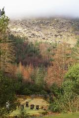 Sun through the mist. (artanglerPD) Tags: grave stones quiet corner trees mountain mist