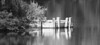 Dock on a River (maytag97) Tags: maytag97 nikon d750 tamron 150600 150 600 lake pond river dock water bw blackandwhite bush brush shrub reflection contrast shadow