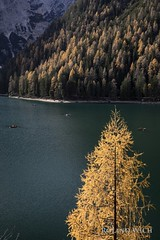 Pragser Wildsee (Rolandito.) Tags: europa europe italia italy italien italie alto adige südtirol south tyrol lake prags pragser wildsee see autumn fall herbst tree trees lago di braies