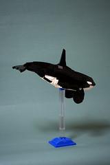 Orcinus orca_3.0 003 (暁工房) Tags: lego moc orca whale animal