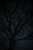 L1001420 (jluebeck) Tags: pfälzerwald trees nacht night baum tree himmel sky stars