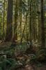 Rare and Endangered (justenoughfocus) Tags: britishcolumbia sonyalpha vancouverisland canada cathedralgrove green landscapephotography trees nanaimof ca
