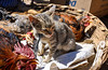 On Sale (Valdy71) Tags: cat animal market guatemala travel viaggi color nikon valdy